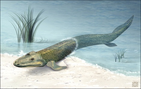 Tiktaalik illustration by National Science Foundation's Zina Deretsky